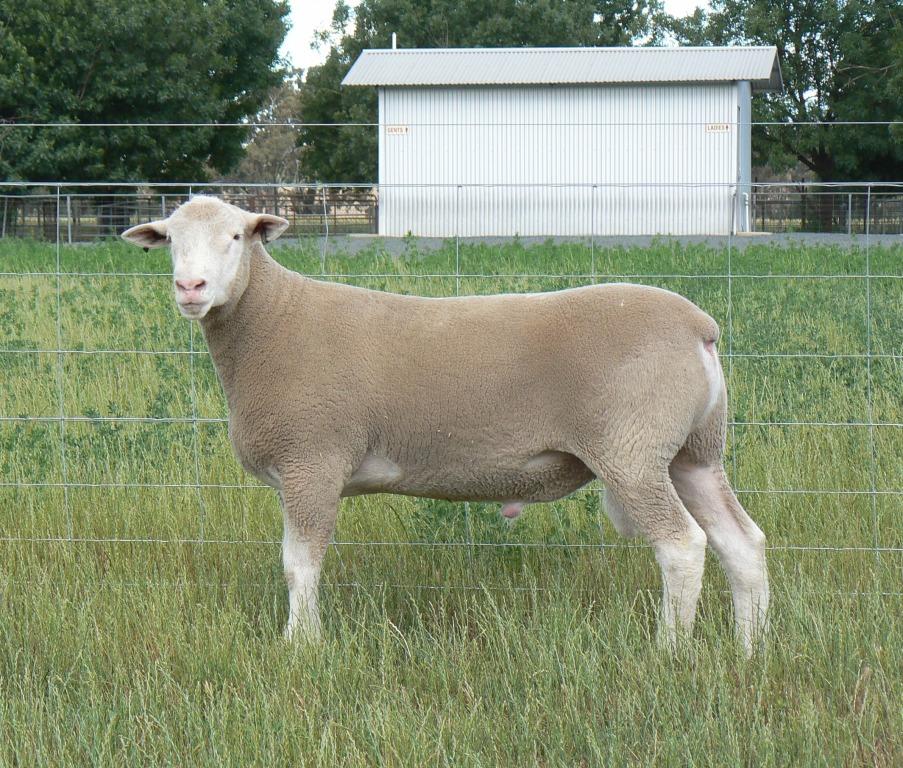 Keeper-Ram-527-16-recent
